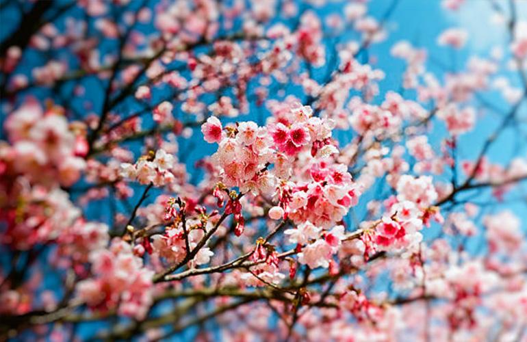 Le printemps est là (par Eva)